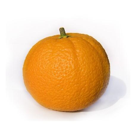 Olio Essenziale di Arancio dolce spugna