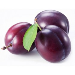 Foglioline per Susina di frutta martorana