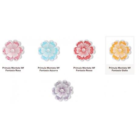 35 pezzi Primula in cialda vari colori fiori per torte