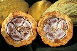 Semi burro di cacao